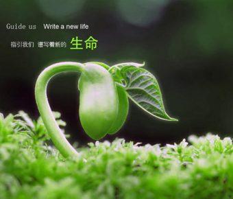 【PPT生命背景】優質的4頁PPT生命背景模板下載,靜態大自然生命素材的下載格式