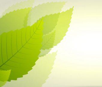 【PPT綠葉背景】完整的4頁PPT綠葉背景模板下載,靜態清新葉子圖案的樣式檔