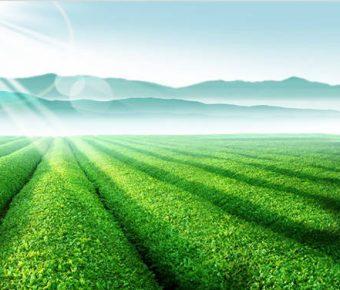 【PPT茶園封面】高品質的2頁PPT茶園封面模板下載,靜態綠色茶園範本的範例作業檔