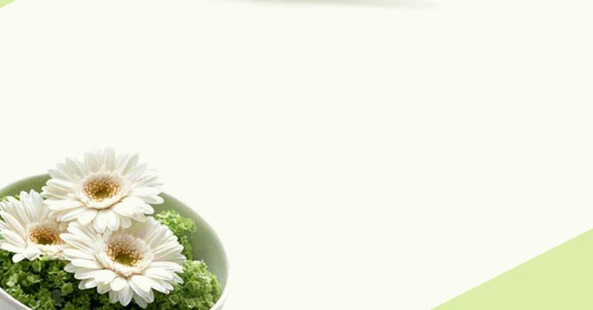 【PPT菊花背景】精品的2頁PPT菊花背景模板下載,靜態雛菊封面素材的版型作業檔