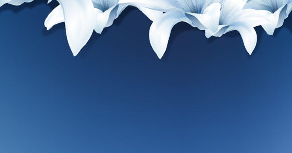 【PPT百合花】高品質的4頁PPT百合花模板下載,靜態百合花背景圖的檔案格式