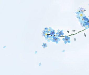 【PPT小花封面】高品質的1張PPT小花封面模板下載,靜態花朵底圖素材的簡報主題檔