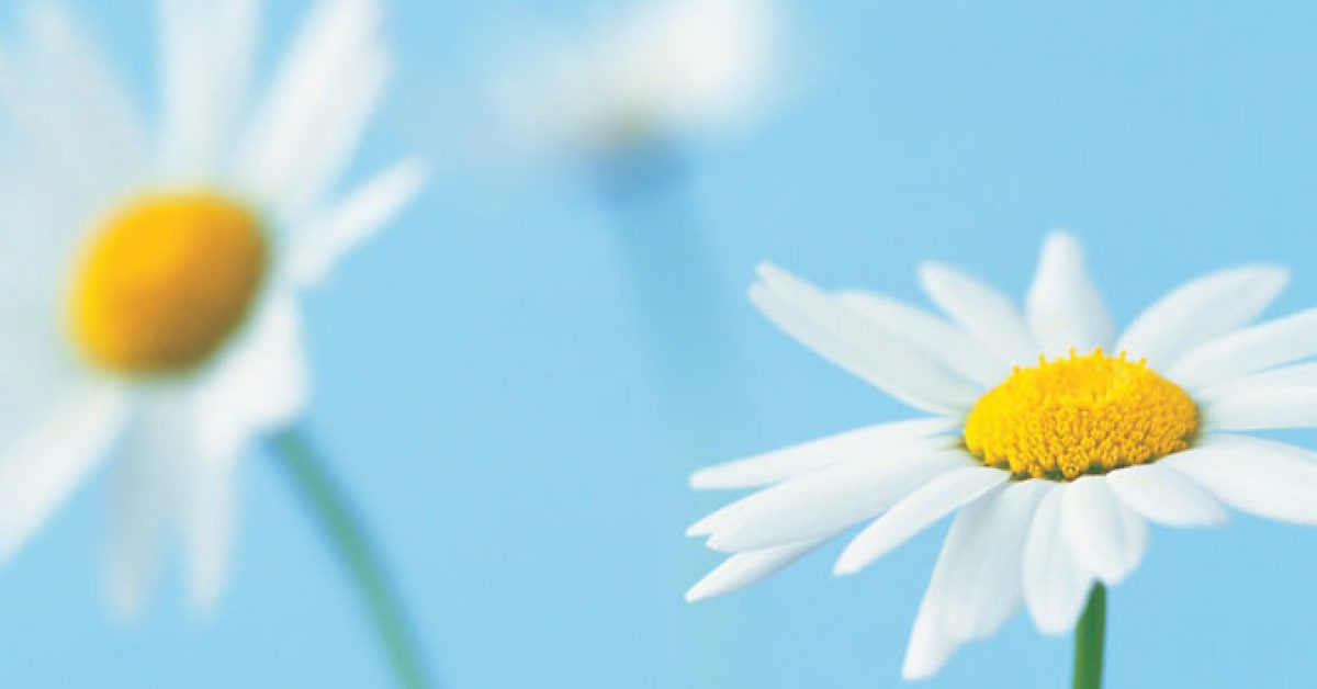 【PPT輕淡背景】完美的5張PPT輕淡背景模板下載,靜態淡雅花朵底圖的模板格式檔
