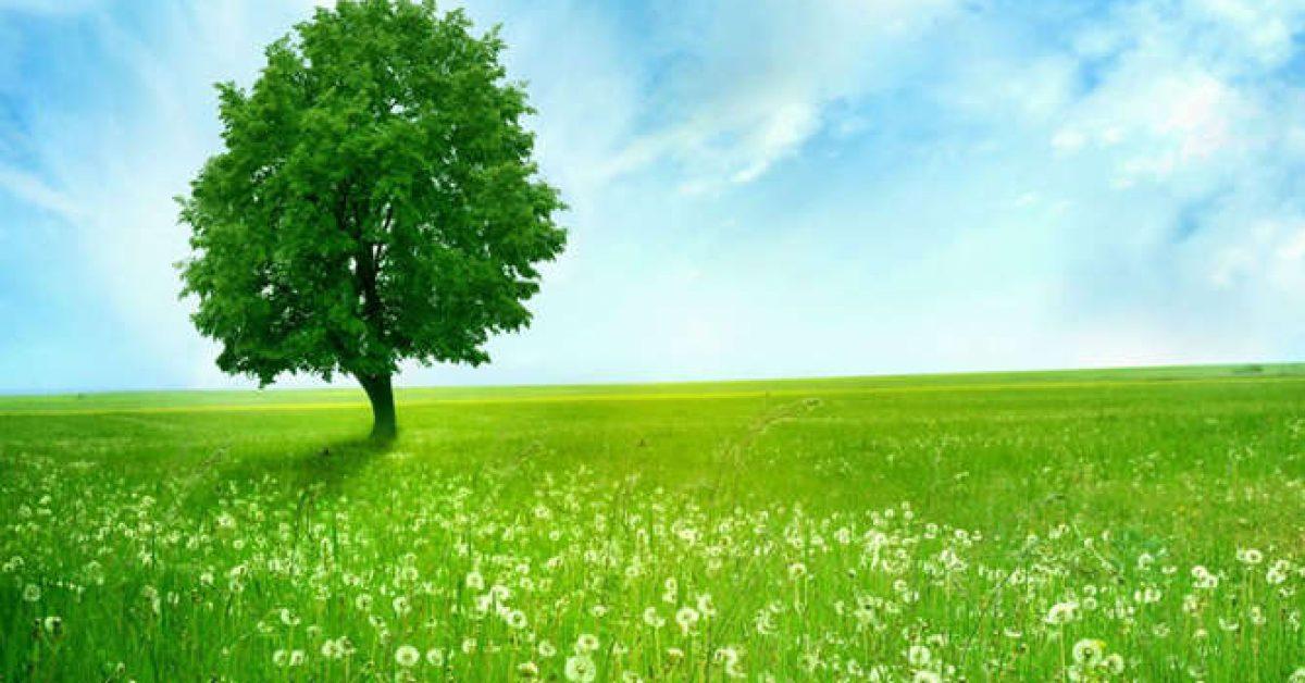 【PPT綠樹背景】很棒的1張PPT綠樹背景模板下載,靜態藍天草原底圖的模板格式