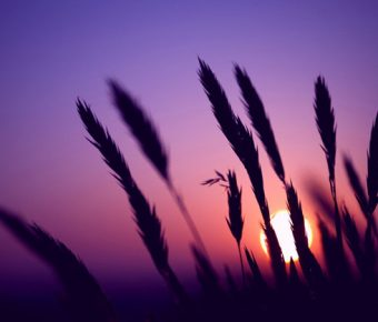 【PPT狗尾草背景】最好的1張PPT狗尾草背景模板下載,靜態夕陽剪影底圖的佈景格式檔