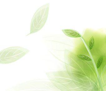 【PPT夢幻樹背景】卓越的2張PPT夢幻樹背景模板下載,靜態葉子素材圖案的模板格式