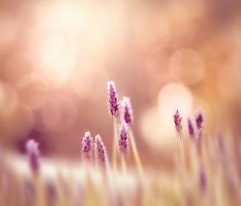 【PPT小花背景】不錯的6張PPT小花背景模板下載,靜態花草素材的下載格式