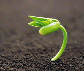 【PPT種子背景】最好的11張PPT種子背景模板下載,靜態勵志行銷素材的版型作業檔