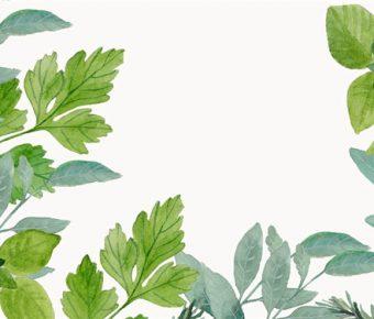 【綠葉背景圖】很棒的4張綠葉背景圖模板下載,靜態植物底圖的素材作業檔