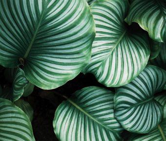 【植物背景】最好的6張植物背景模板下載,靜態叢林背景圖的範例作業檔